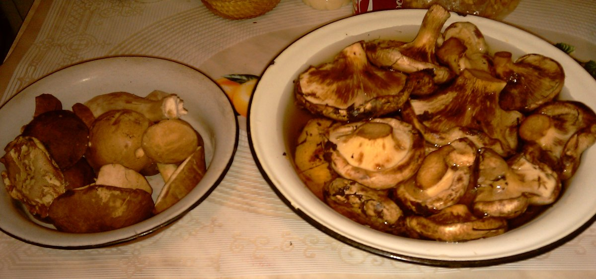 дуньки фото грибы