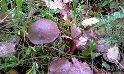 Ещё не осень, но листьев опавших уже много! - увеличить