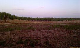 Ещё в прошлом году здесь был густой молодой лес, теперь пустыня - увеличить