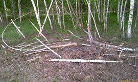 Советский лес теперь русским не нужен - увеличить