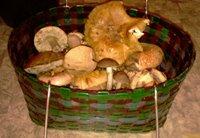 Первая в этом году корзинка грибов - увеличить