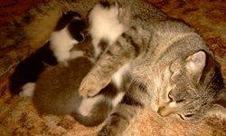 Мамка Василиска с котятами - увеличить