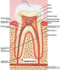 Настрои Сытина - от зубной боли