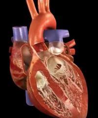 Добиваюсь полного восстановления здоровья сердца
