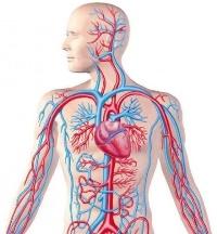 Омоложение кровеносных сосудов. Настрой Сытина