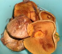 2-й участок. Осень - завершение грибного сезона 2010 года