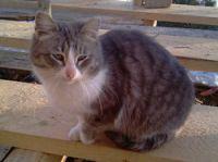 ропали кошки из сада - непонятно как