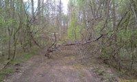 Упало дерево - ни проехать ни пройти - увеличить