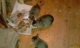 Кошачий пир - увеличить