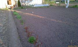 Левая сторона сада - три прохода - увеличить