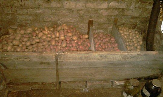 Отличный урожай картошки. Осень 2011 года
