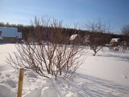 Зимняя сирень и много снега - увеличить