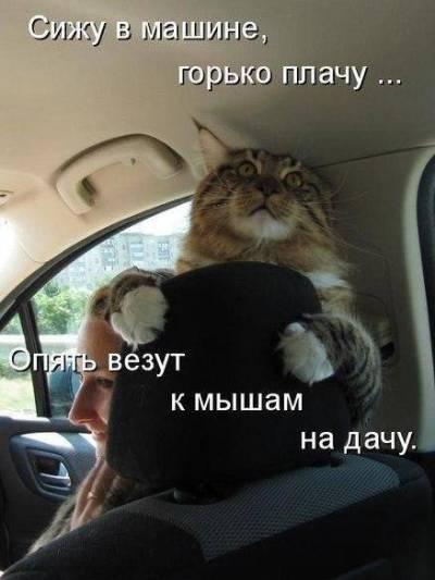 Сижу в машине, горько плачу...