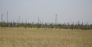 Горелый лес - перед Касимовым (снимок сделан в 13:10) - увеличить
