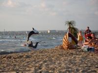 Песчаный пляж СК БФО - увеличить