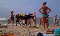 Ослик на пляже - увеличить