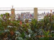 Вид с балкона - красивый цветник и в 50-ти метрах море! - увеличить