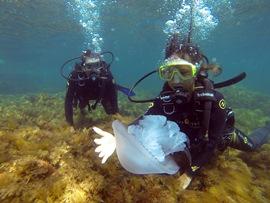 И медузы здесь, под водой, оё-й какие большие! - увеличить