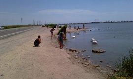 Интересное место на дороге Саки Евпатория - много лебедей! - увеличить